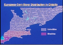 Map of Southern Ontario, showing range of univoltine and bivoltine corn borer populations and overlap zone.