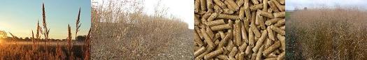 Agricultural Biomass for Combustion Energy