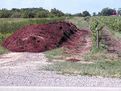 Temporary field storage of manure in a vineyard.