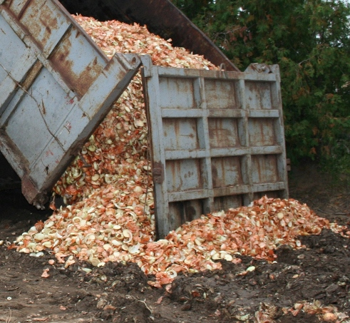 Photo of a temporary field storage of culled onions from a food processor