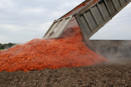 Photo of tomato waste being unloaded from a dump truck onto a field.