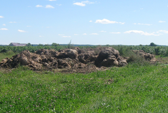 Photo of piles of manure on the ground behind the barn, are not temporary field storages.