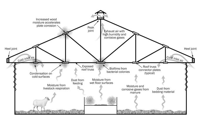 This sketch is a cross section of an unheated sheep barn that has no ceiling, exposing the trusses to the indoor environment.  The sketch shows some typical sources of moisture, corrosive gases and dust in a barn environment.