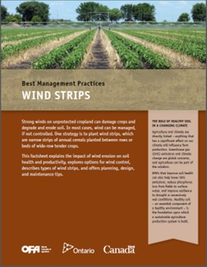 Image of Wind Strips
