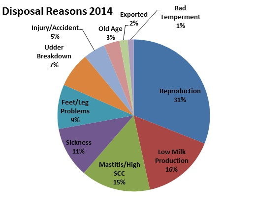 Pie chart showing reasons for dairy cows being culled.