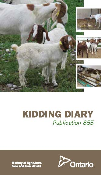 Publication cover picture for Kidding Diary publication 855