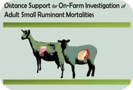 Distance Support for On-Farm Investigation of Adult Small Ruminant Mortabilities