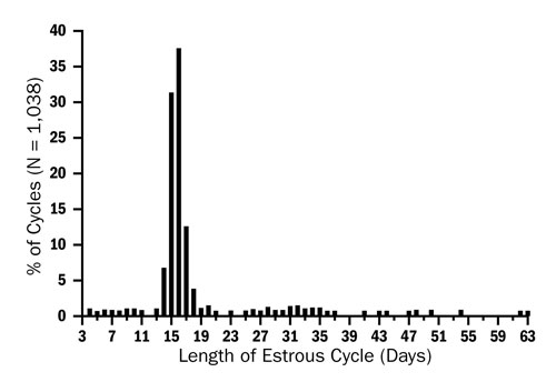 Figure 3: This graph shows the distribution of different lengths of the estrus cycle in 1,038 ewes. There were ewes with all cycle lengths between 3 days and 37 days, and a few ewes with as long as 63 days. The large majority of the ewes had estrus cycles that ranged from 14-19 days long.