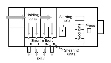 Floor layout for an across-the-board catch pen systems. The diagram show holding pen areas on the top left, the shearing board at the bottom middle and the table, wool bins and press on the right side