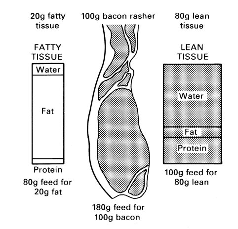 Composition of lean and fatty tissue.