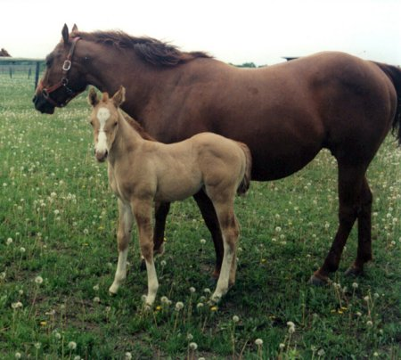 Mare with her foal standing on a pasture.