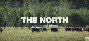 The North - You're not alone