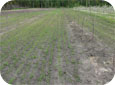 Early September is the best time to establish grass for the orchard floor.